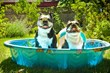 Tips for Relief in the Dog Days of Summer Provided by Canine Company