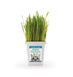 Pet Greens House Blend Live Cat Grass