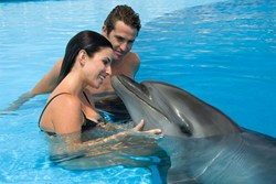 Hawaii Wedding Clients Interacting with Dolphins