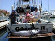 New Website for Cabo San Lucas Fishing Charter