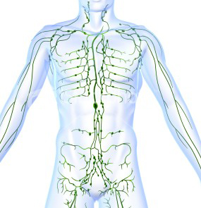 Manual Lymphatic Drainage - Therapielv