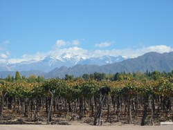 Chile wine tour Andes