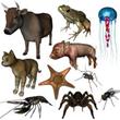 Zoology @ EurekaMag.com
