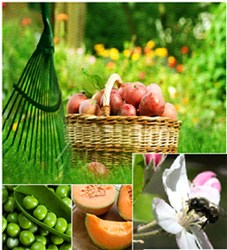 Collage of fruits, veggies and a mason bee pollinator