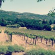 Overlooking the Ackerman Family Vineyards in Napa Valley.