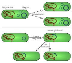 Molecular cloning @ EurekaMag.com