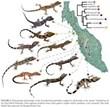 Molecular Phylogeny @ EurekaMag.com