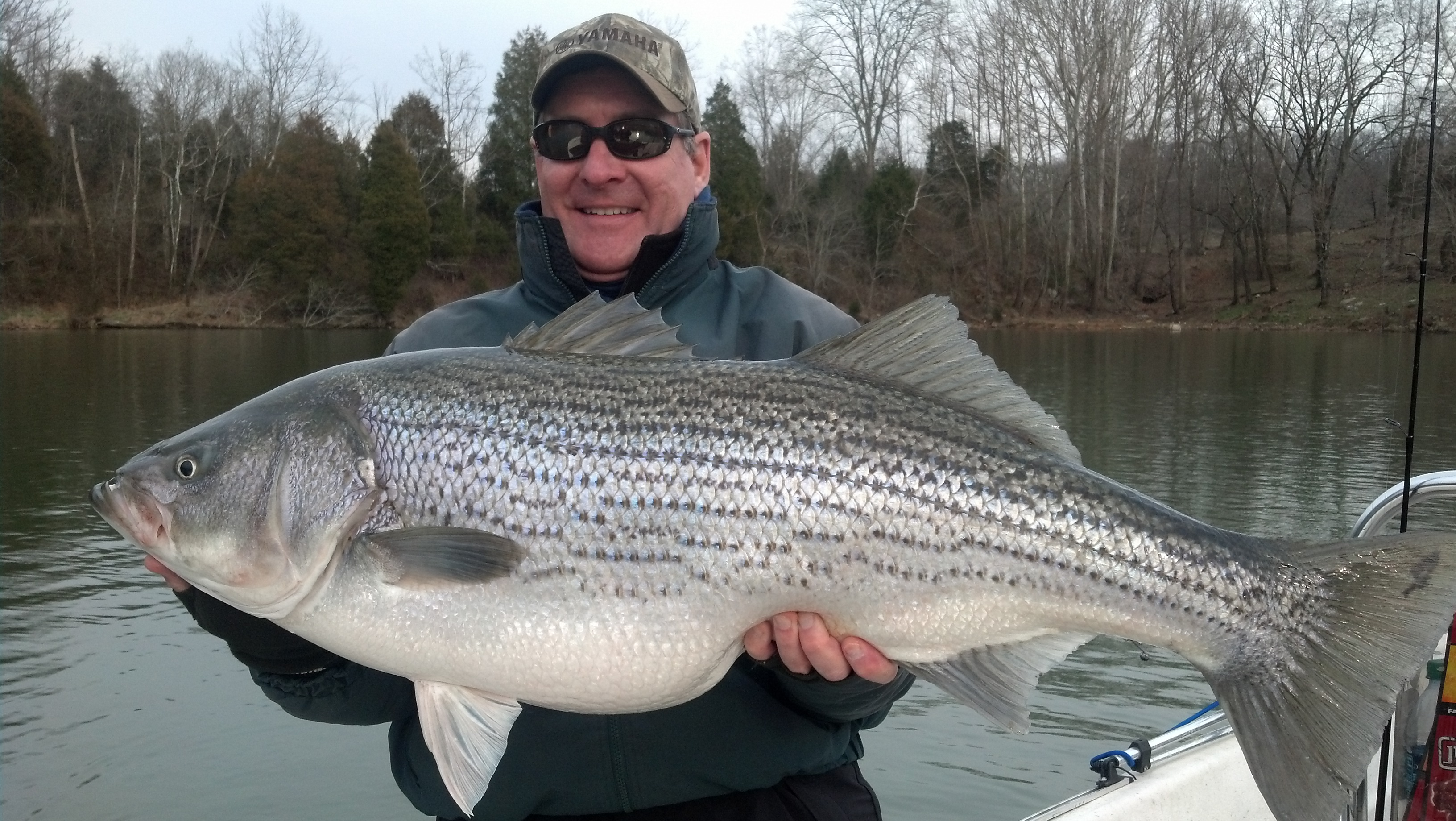 Jay 39 s striper guide service is now providing novice and for Fishing lakes in tennessee