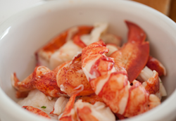 Fresh, hand-picked Maine lobster meat