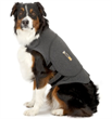 Severe Dog Anxiety and Stress Burdens Dogs Affected by Recent Tornadoes, Severe Storm Systems