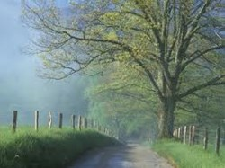 Located in the heart of the scenic Smoky Mountains, Cades Cove offers breathtaking views any visitor will enjoy.