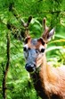 Cades Cove is also home to lots wildlife that inhabit the scenic Smoky Mountains.
