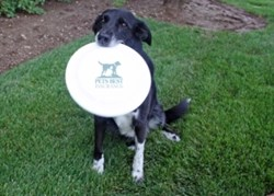 A black dog sits in the grass with a Pets Best Insurance frisbee in her mouth