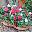 UK Florist - Flowers24hours Flourish with their New Outdoor Plant Gifts