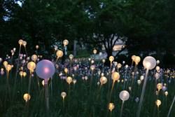 Bruce Munro's Field of Light