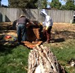 Tree Removal Denver - Bee Colony Relocation - Swingle