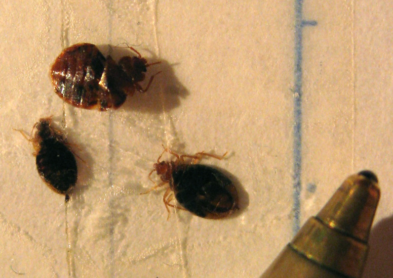 Cleaning Products To Kill Bed Bugs