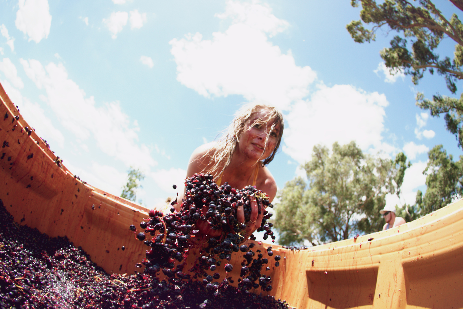 grape throwing festival surely to be the rarest of travel
