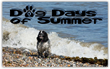 Filtersfast.com Celebrates the Dog Days of Summer With Pet Owners