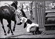 "Princess Anne takes a tumble from ""Purple Star"" at the Army Horse Trials, Tidworth, May 1970"