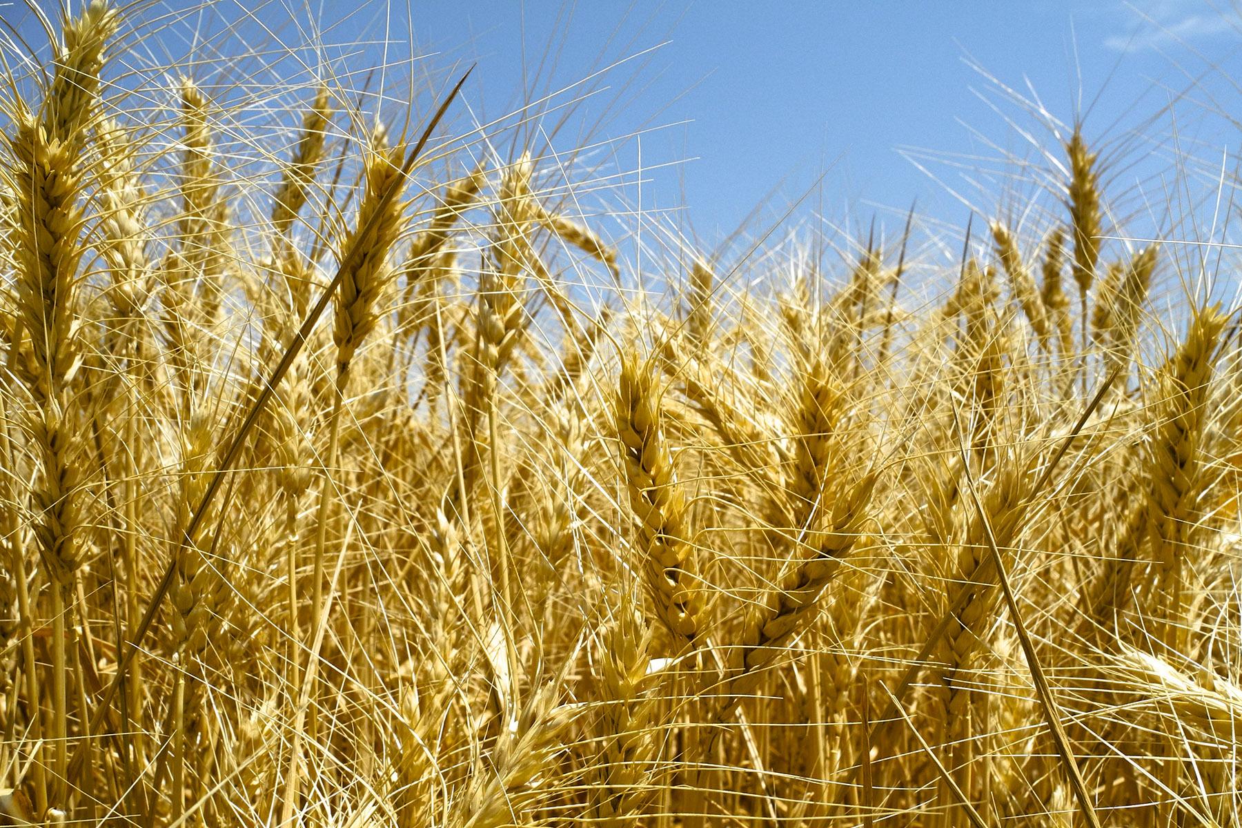 40,000+ Acres of Kansas and Nebraska Land Hit Auction Block through