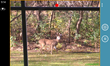 Deer on property - Windows Phone camera view