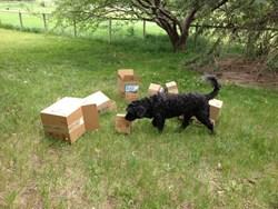 Citizen Canine Dog Training | K9 Nose Work Classes | Longmont, CO