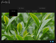 Jhentea, tea from Taiwan provider, new homepage