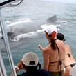 Costa Rican Humpback Whales Seen From Manuel Antonio's Shana...