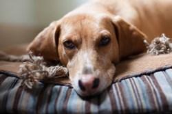 An Elder Dog