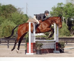 Mojo Race Horse Retired to Hunter Jumping