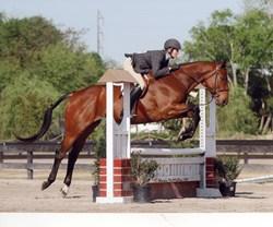 Mojo Race Horse Retired to Hunter Jumping
