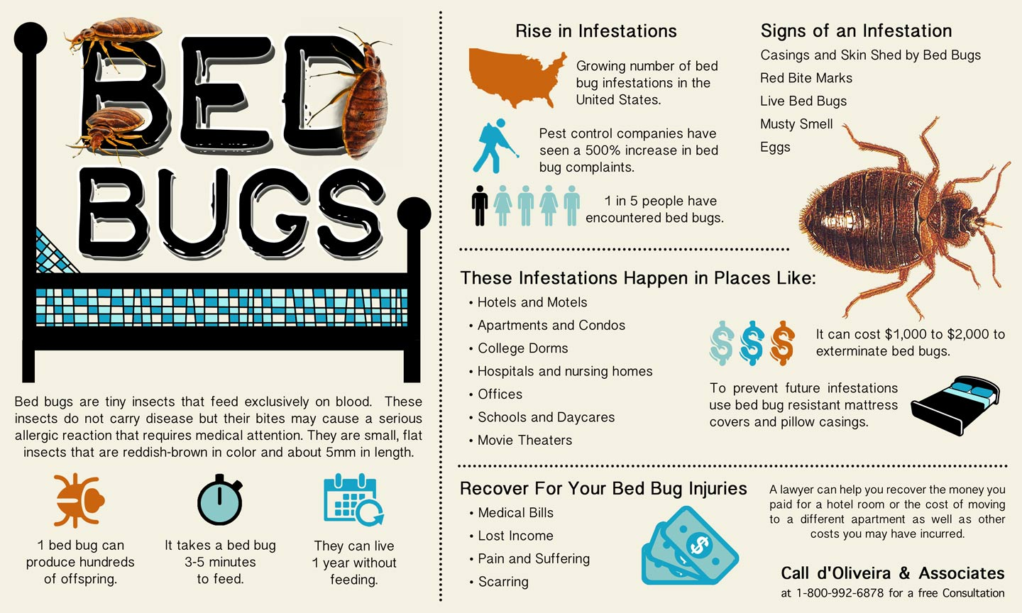 Injury lawyer releases new informational graphic about bed for Bed bug litigation