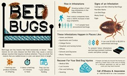 Bed Bugs Infographic with signs and locations of bug infestations