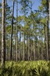 Forest Company Partnership to Aid North Carolina's Private Forests; American Tree Farm System® Announces Expansion of Certified Acreage