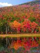 Fall, foliage