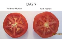 Tomato Test