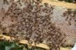 Hive by E Wilkinson