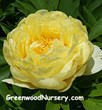 Greenwood Nursery Announces Addition of the Bartzella Itoh Peony to...