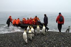 King penguins greet visitors on an Antarctica cruise to South Georgia Island in the sub-Antarctic
