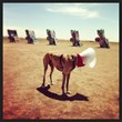 Greyhound at the Cadillac Ranch in Texas