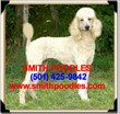 Standard Poodle Puppies Now Available from Smith Poodles