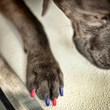 Dog Nail Polish: Fashion Going to the Dogs