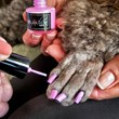 Dog Fashion Spa Nail polish in Cute Paw