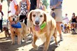 Dogs enjoy the Best Friends Animal Society Strut Your Mutt event at Woodley Park in Van Nuys on Sunday, Sept. 15.