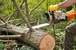 Tree Trimmers Insurance Now Offers General Liability Insurance for All...