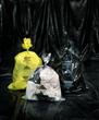 Durapax Asbestos Waste Disposal Bags
