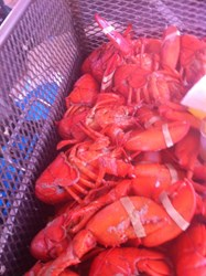 Steamed Maine Lobster Set Guinness World Record