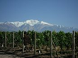 The vineyards at Auberge du Vin