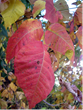 Poison Ivy, Oak & Sumac Exposure Season Continues into Autumn -...